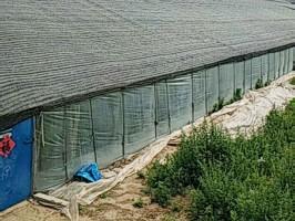 河南大棚专用遮阳网